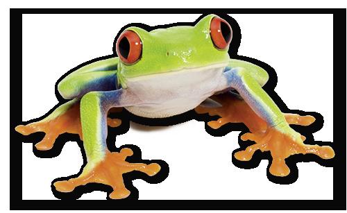 Frosch Desinsekta